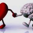 Herz und Verstand